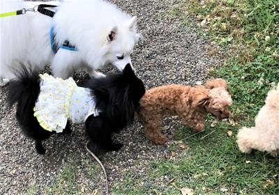 公園で集まる犬たち