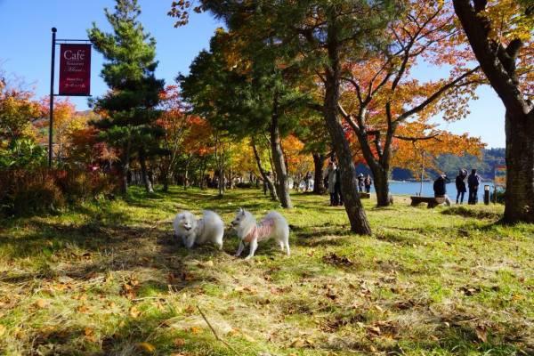 芝生のスペースに犬