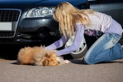 車に敷かれた犬と女性