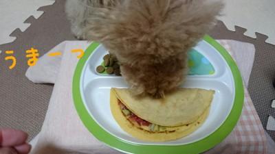 犬が食べている