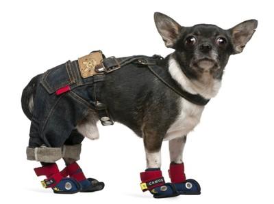 足にサポーターを巻いた犬