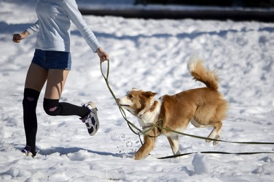 雪の中で女性と走る犬