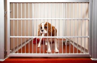ペットホテルに泊まる犬
