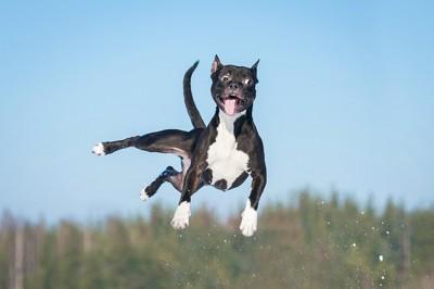 変な顔でジャンプしてる黒い犬