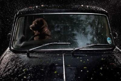 車の運転席にいる茶色い犬