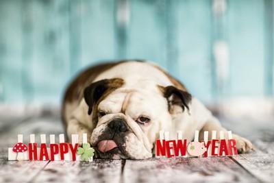 新年の文字と舌を出して伏せる犬