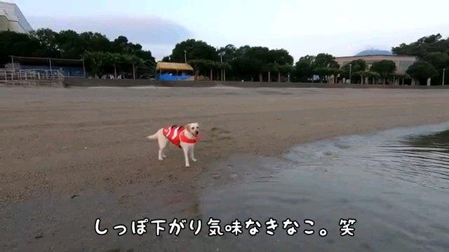しっぽ下がり~字幕