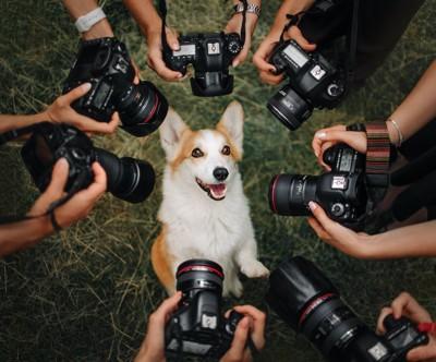 たくさんのカメラに囲まれている犬