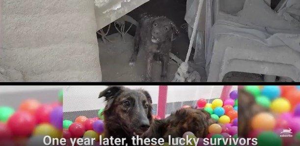犬1ビフォー・アフター