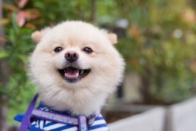微笑んでいる犬