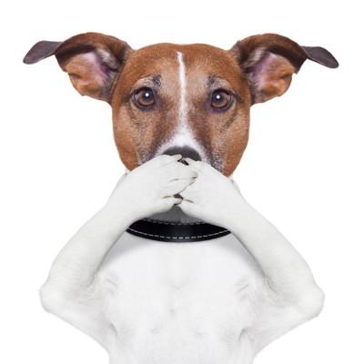 47912209 両手で口を押える犬