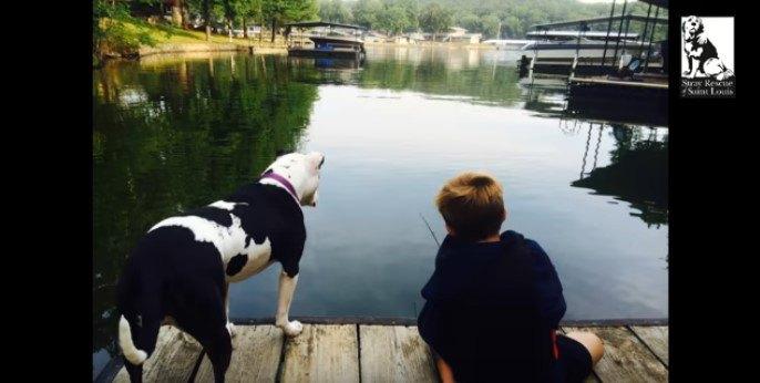水難救助犬になったジェリーフィッシュ