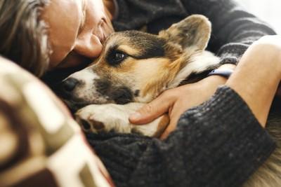 男性に抱きしめられているコーギー犬
