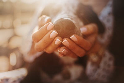 犬の鼻とマズルを支える女性の手