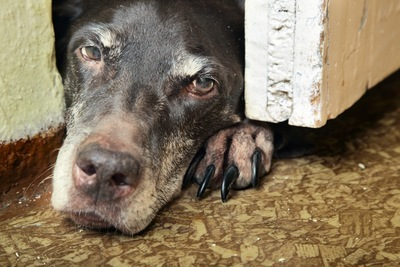 ドアのすき間に隠れる犬