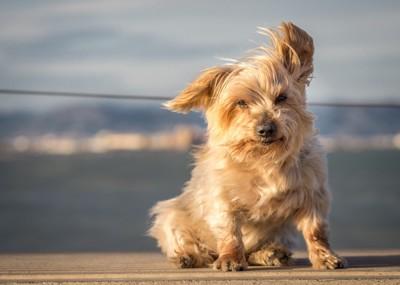 風になびく犬
