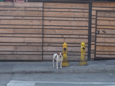 消火器の横に立つ犬