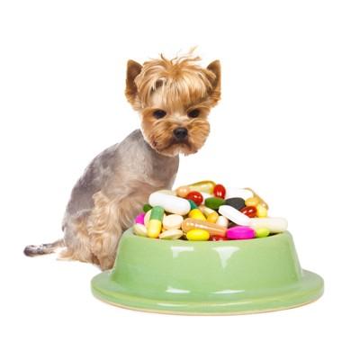 皿に盛られた薬と見つめる犬