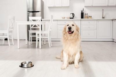 犬とキッチン