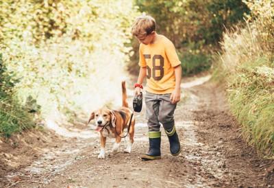 散歩する男の子とビーグル