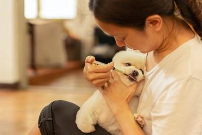 犬にシリンジで薬を与える女性