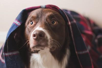 驚いた表情の犬