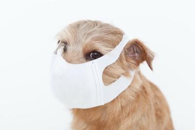 マスクをつけている犬