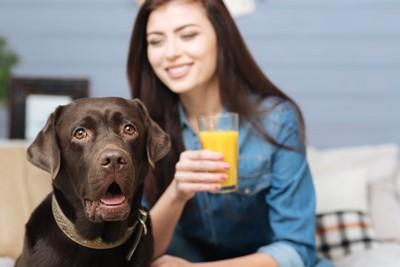 ジュースを持った女性と犬