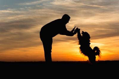 夕日の中でハイタッチをする犬と人のシルエット