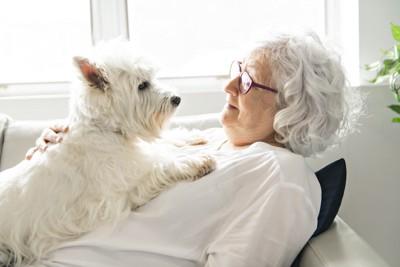 胸元で寛ぐ白い犬
