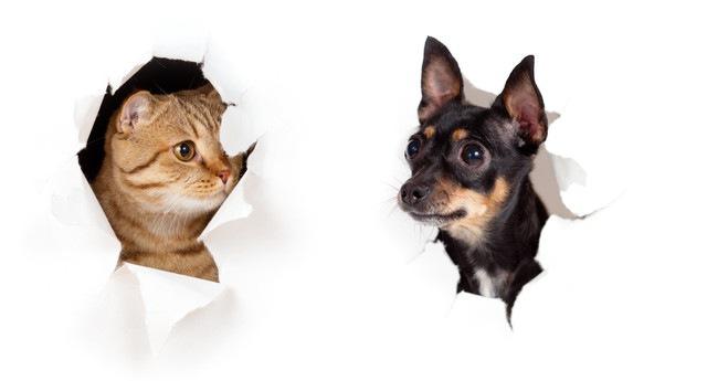 紙をやぶる犬と猫