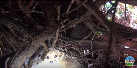 茂みの奥に隠れる子犬