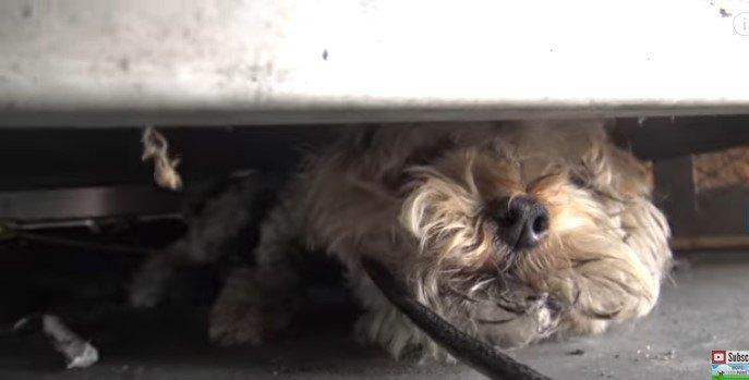 リードで引っ張られる犬