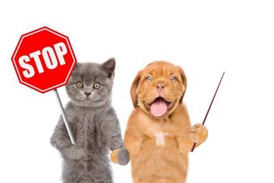 ストップサインを出す猫と犬