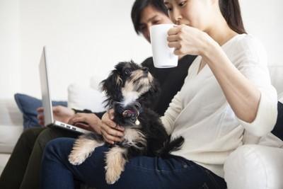 女性の膝の上で寛ぐ子犬