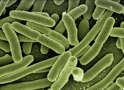 バクテリアイメージ