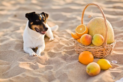 フルーツと犬