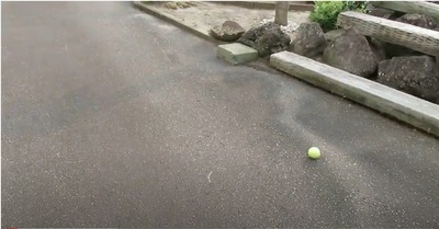 お外にテニスボール
