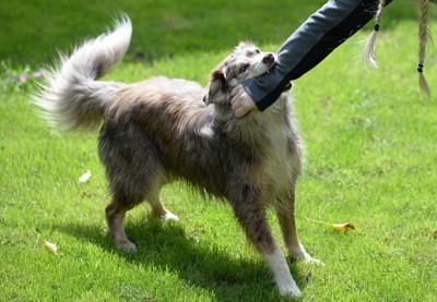 噛み付く犬