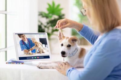 獣医とオンライン相談
