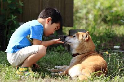 柴犬と向かい合う男の子