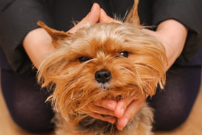 顔を包まれて不満そうな犬