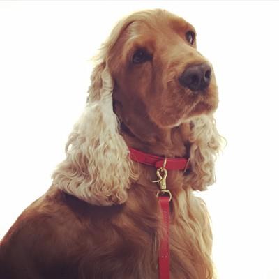 タレント犬.jpg