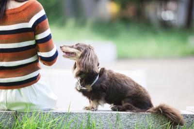 座っている飼い主の横で見つめながら座っている犬