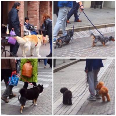 犬を連れて歩く人たち