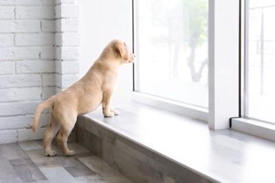 身を乗り出して窓の外を見つめる子犬