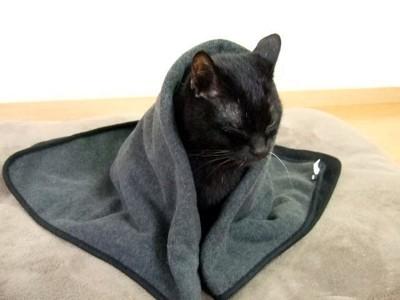 毛布に包まる猫 くろい