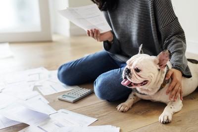 書類を見つめる女性と電卓と犬