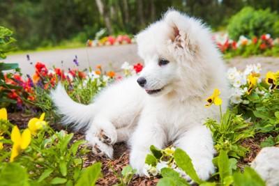 花壇に入ってしまった子犬