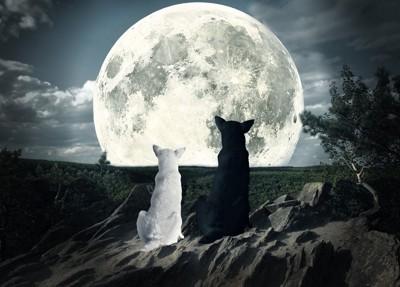 月を見る犬2匹